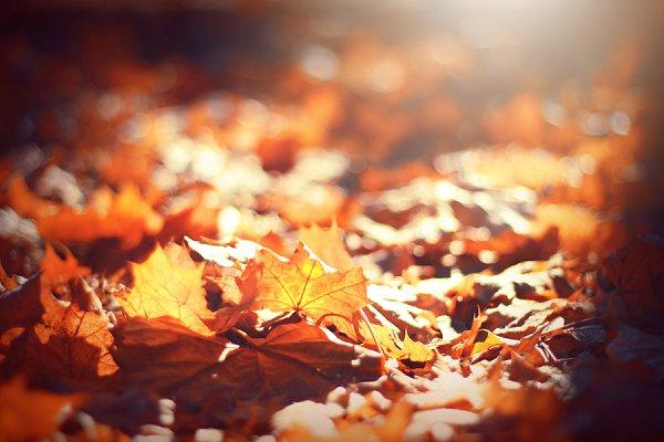 5 Ways to Transform Your Hair This Autumn